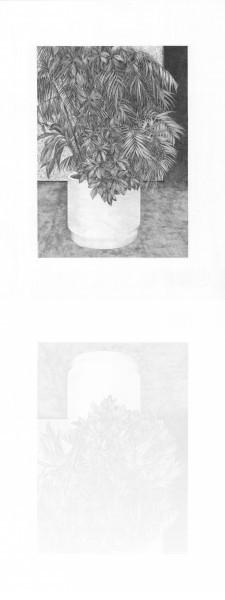 Hall B -plante 1, mine graphite sur papier, 2014