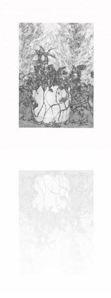 Hall B -plante2, mine graphite sur papier, 2014